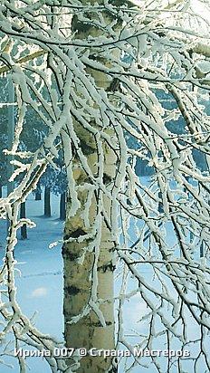 После оттепели веточки деревьев покрылись инеем. Красотища! фото 4