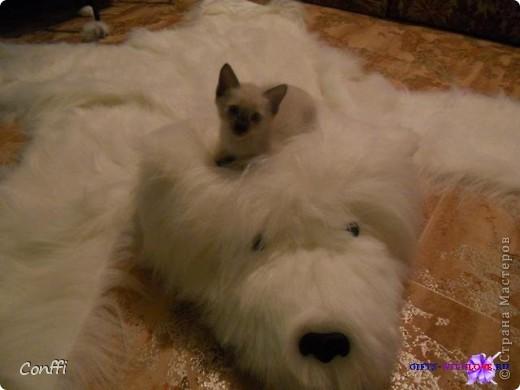 Сшила в подарок себе любимой вот такой коврик. Теперь это любимый коврик моего котика. Выкройку нигде не нашла, так что пришлось придумывать самой. фото 1