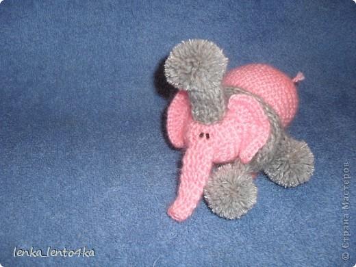 Слон фото 3