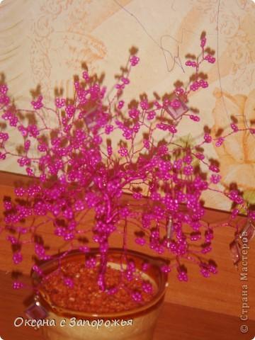 розово-фиолетовый хрусталик
