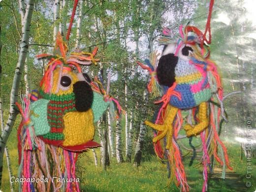 попугайчики фото 1