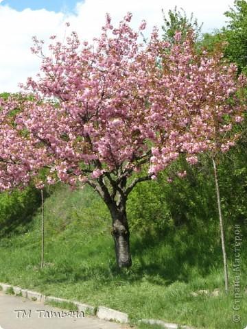 Дерево Сакура М К Бисер