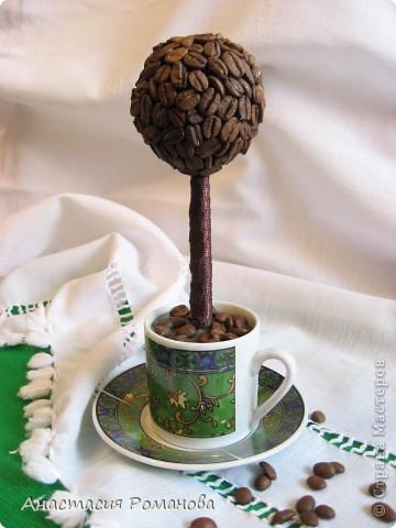 Вот и я стала счастливой обладательницей кофейного дерева. А аромат какой фантастический, ммммм.....