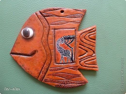 Рыбка Африка фото 1