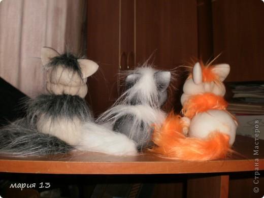 мои первые котятки фото 2