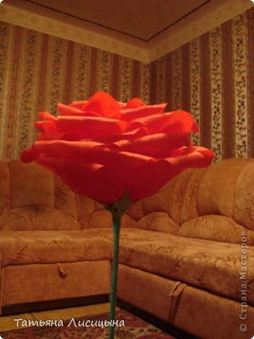 Розы гигантелы фото 4
