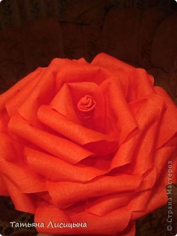 Розы гигантелы фото 5