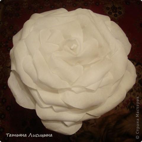 Розы гигантелы фото 3