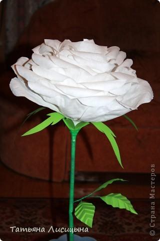 Розы гигантелы фото 1