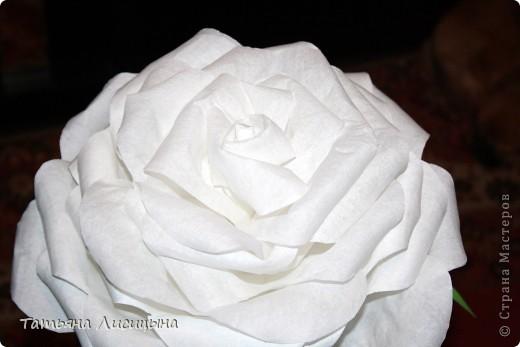 Розы гигантелы фото 2