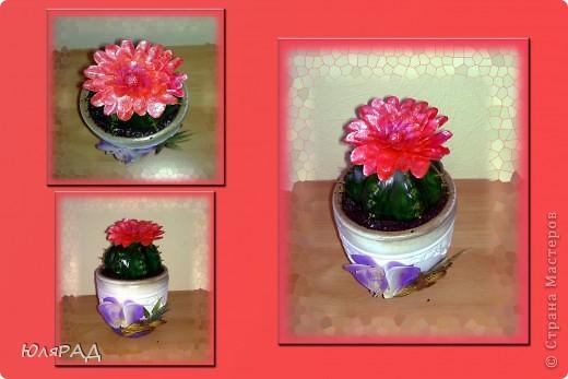 Кактус из солёного теста, цветок из холодного фарфора.