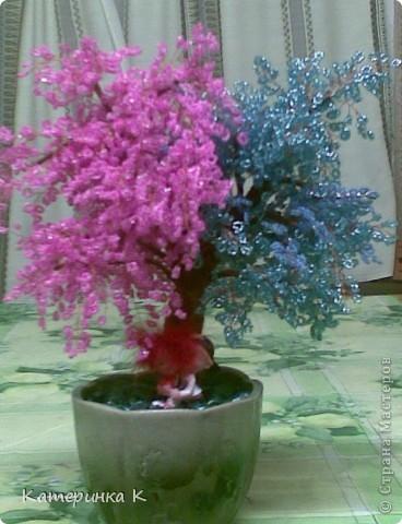 дерево лю) для любимого