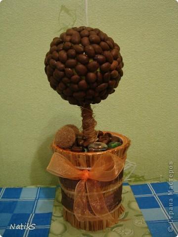 Вот и моё кофейное деревце!!! фото 1