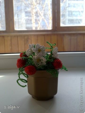 наконец-то и у меня созрели ягодки.... фото 3