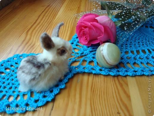 Вот мой первый опыт-кролик. фото 2
