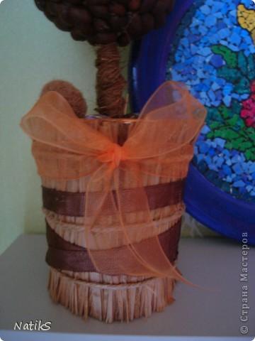 Вот и моё кофейное деревце!!! фото 2