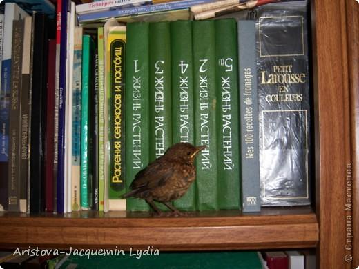 Озеро, дерево и птица (дрозд — птица певчая ) — символы творчества, надежда на слияние с миром и возвращение чего-то утраченного. фото 7