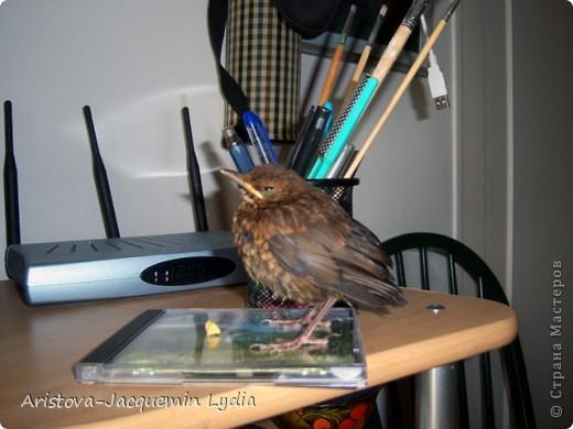 Озеро, дерево и птица (дрозд — птица певчая ) — символы творчества, надежда на слияние с миром и возвращение чего-то утраченного. фото 12