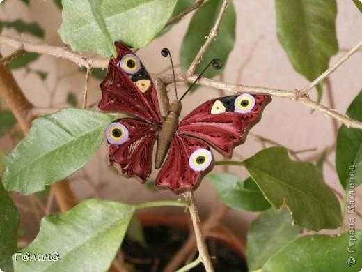 квиллинг бабочка