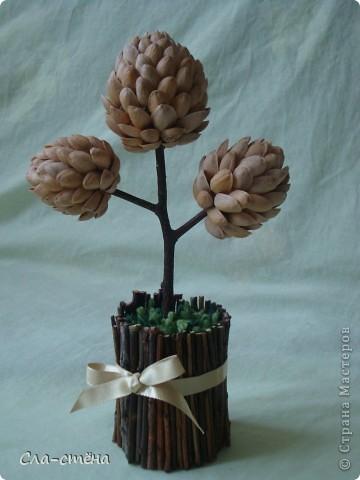 Фисташковое дерево фото 2