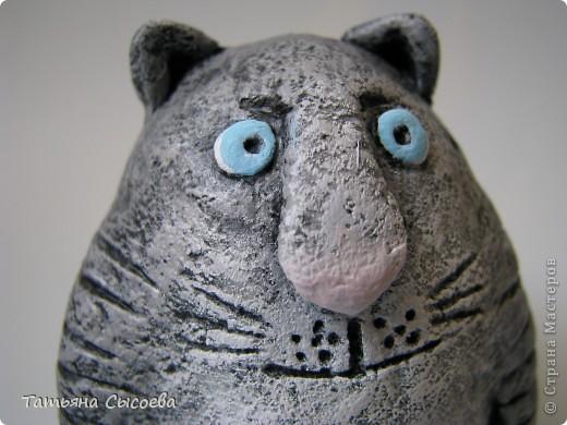 Если бы бультерьер был котом, то выглядел бы он приблизительно так... фото 2