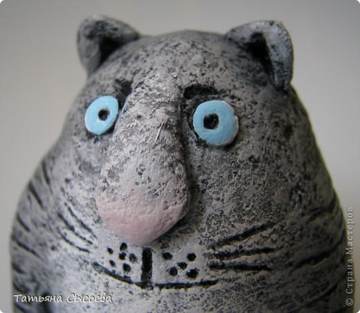 Если бы бультерьер был котом, то выглядел бы он приблизительно так... фото 3