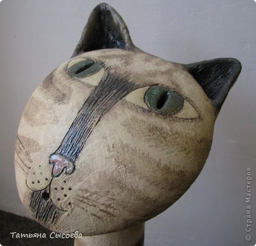 Если бы бультерьер был котом, то выглядел бы он приблизительно так... фото 6