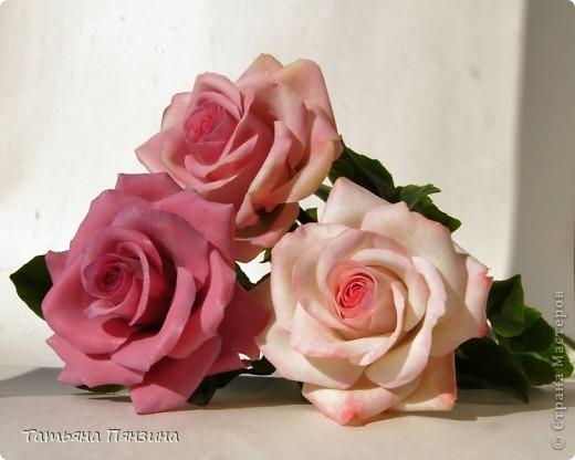 Пока проводила фотосъёмку роз, пришла модель и решила оживить обстановку.  фото 3