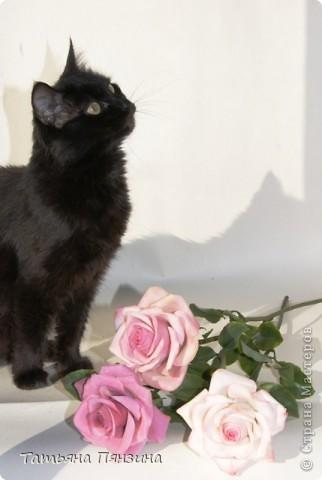 Пока проводила фотосъёмку роз, пришла модель и решила оживить обстановку.  фото 2