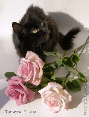 Пока проводила фотосъёмку роз, пришла модель и решила оживить обстановку.  фото 1