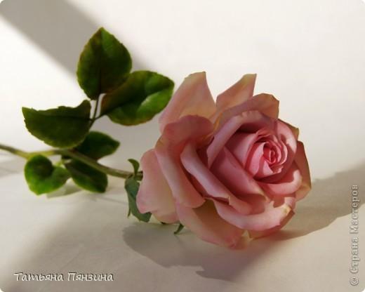 Пока проводила фотосъёмку роз, пришла модель и решила оживить обстановку.  фото 4