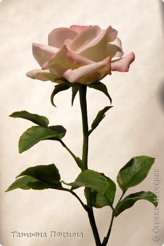 Пока проводила фотосъёмку роз, пришла модель и решила оживить обстановку.  фото 5