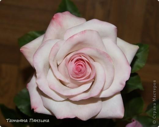 Пока проводила фотосъёмку роз, пришла модель и решила оживить обстановку.  фото 7