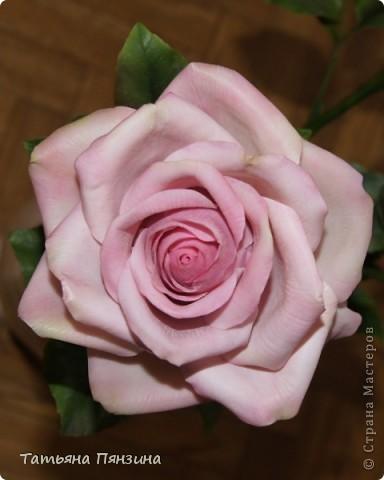 Пока проводила фотосъёмку роз, пришла модель и решила оживить обстановку.  фото 8