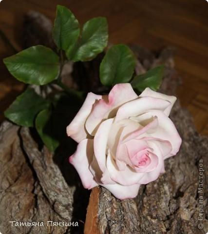 Пока проводила фотосъёмку роз, пришла модель и решила оживить обстановку.  фото 6
