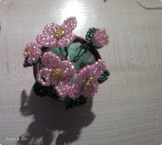 Цветы в горшочке   фото 1