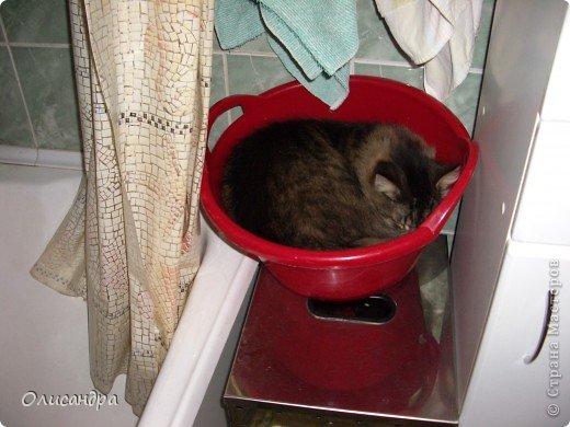"""Есть у меня питомец по имени Адам! Была еще и Ева, но """"унеслась к богам"""", Теперь любимый котик живет у нас один, Хозяин в нашем доме ! Нет, даже, господин!!! Он спит, лишь,там, где хочет,ест, правда, что дадут, Хочу его представить...Портфолио ,вот, тут... фото 9"""