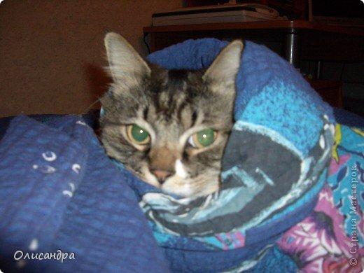 """Есть у меня питомец по имени Адам! Была еще и Ева, но """"унеслась к богам"""", Теперь любимый котик живет у нас один, Хозяин в нашем доме ! Нет, даже, господин!!! Он спит, лишь,там, где хочет,ест, правда, что дадут, Хочу его представить...Портфолио ,вот, тут... фото 5"""