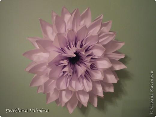 цветок лотоса фото 3