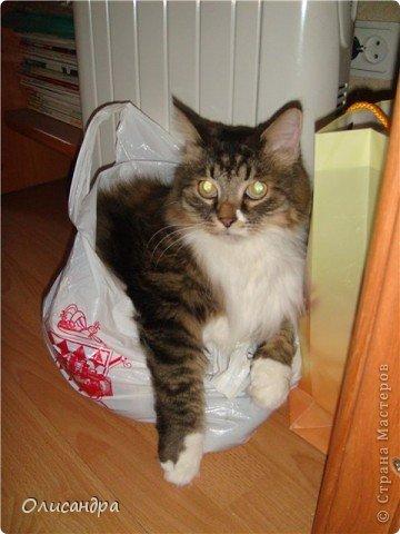 """Есть у меня питомец по имени Адам! Была еще и Ева, но """"унеслась к богам"""", Теперь любимый котик живет у нас один, Хозяин в нашем доме ! Нет, даже, господин!!! Он спит, лишь,там, где хочет,ест, правда, что дадут, Хочу его представить...Портфолио ,вот, тут... фото 14"""