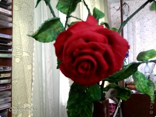 Кто сказал, что в Сибири не растут розы? Еще как растут! фото 3
