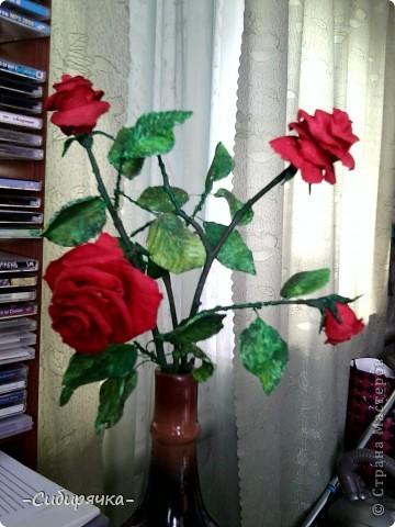 Кто сказал, что в Сибири не растут розы? Еще как растут! фото 2