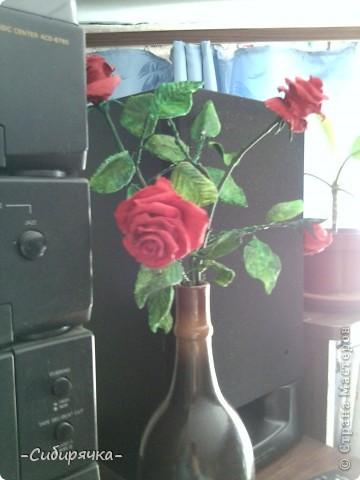 Кто сказал, что в Сибири не растут розы? Еще как растут! фото 4