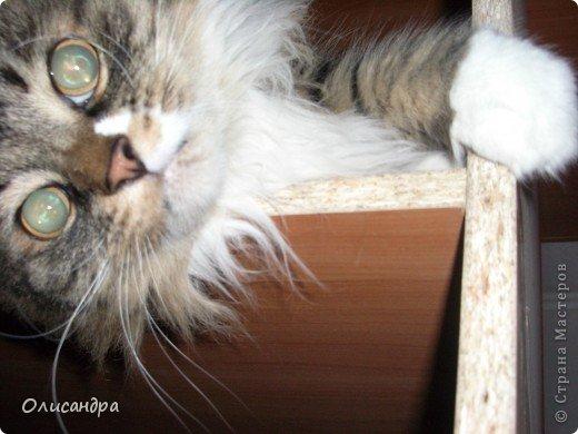 """Есть у меня питомец по имени Адам! Была еще и Ева, но """"унеслась к богам"""", Теперь любимый котик живет у нас один, Хозяин в нашем доме ! Нет, даже, господин!!! Он спит, лишь,там, где хочет,ест, правда, что дадут, Хочу его представить...Портфолио ,вот, тут... фото 21"""