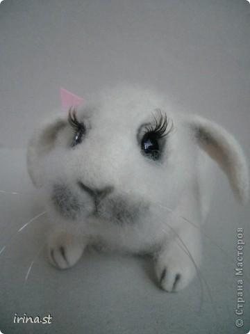 Кроля фото 1