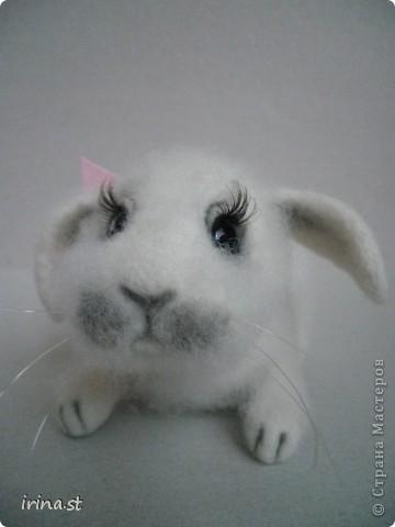 Кроля фото 5