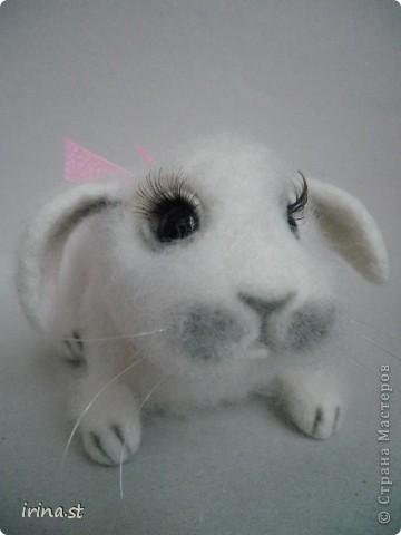 Кроля фото 2