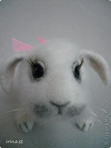 Кроля фото 6