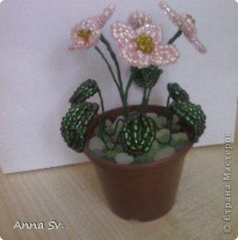 Цветы в горшочке   фото 3