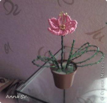 Цветок фото 1